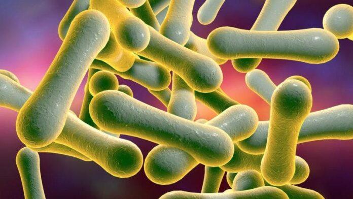 Difteria: confirman el primer caso en Perú 20 años después de haber erradicado la enfermedad